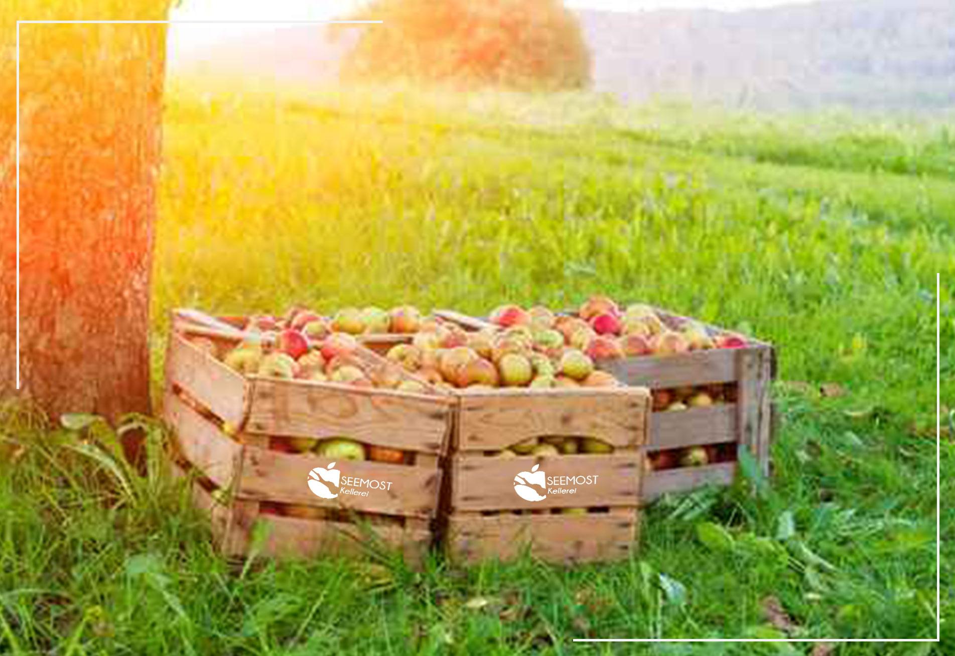 Unser Obstwein Seemost Kellerei